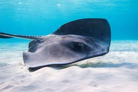 Cayman Islands Natural Wonders